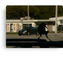 tip toe . on the suv Canvas Print
