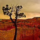 Cliffhanger - Bryce Canyon  by Melissa Seaback