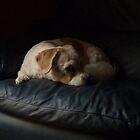 Toby Having A Rest From Buddy by joycee