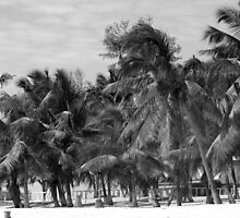 Palm Beach - Not Really by FFRPhoto