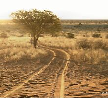 SUNLIT TRACKS - Tswalu Kalahari by Sandy Beaton