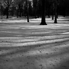 fresh snow. central park, new york city  by tim buckley | bodhiimages photography