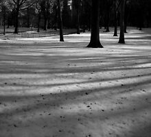 fresh snow. central park, new york city  by tim buckley | bodhiimages