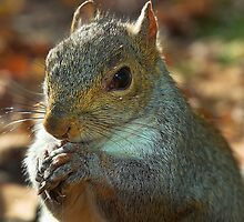 Squirrel posing with nut by Winksy