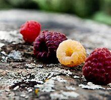 Raspberries by Sandra Hobbs