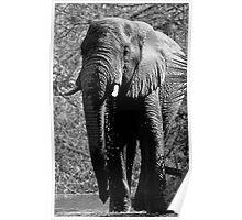 Elephant Spa Poster