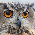 Eurasian Eagle-owl by Lindie