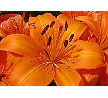 Lilies of the Day Photographic Print