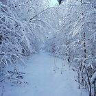 Deep in the Wintry Forest by Braedene