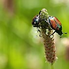Like Two Beetles On A Pod by withacanon