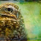 Saw Whet Owl Portrait by alan shapiro