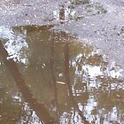 Reflections in the puddle, near the old trestle bridge, Seymour - Victoria, Australia by Margaret Morgan (Watkins)