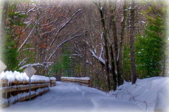 Snow Covered Bike Trail by Monica M. Scanlan