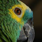 Parrot profile by agenttomcat