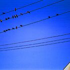 Birds on a Wire by aquinnahimages