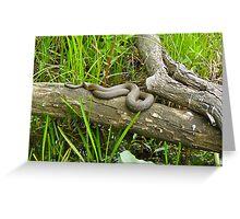 Northern Water Snake (Nerodia sipedon) Greeting Card