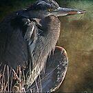 The Heron's Posture by Carolann23