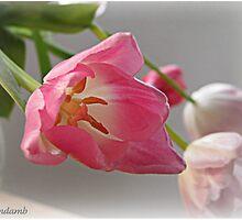 Sweet Pink by Brenda Boisvert