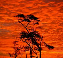 Red Sky Night - My backyard...! Etty Bay Nth Qld by Giovanna Devlin