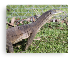 Dragon with forked tongue. Canvas Print