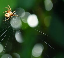Caught his web. by Kerensa Davies