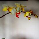 STEM OF ORCHIDS  by scarletjames
