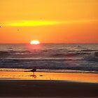 nc sunrise by tamarama
