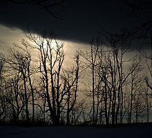 Winter Sun by pmreed