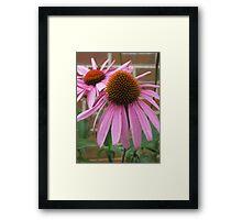 Pink Flower - Mars Hill, N.C. Framed Print