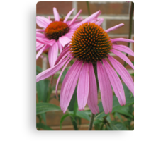 Pink Flower - Mars Hill, N.C. Canvas Print