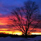Valentine&#x27;s Day Sunrise by Christine &quot;Xine&quot; Segalas