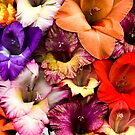 Colorful Gladiolas by Oscar Gutierrez
