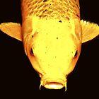 """Gold fish"" by iamelmana"