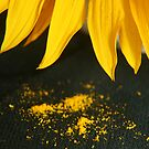 Sunflower closeup by Qnita