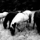 Dark Horses by Anthony Thomas