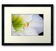 white lilly flower  Framed Print