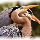 Great Blue Photo Painting by Dennis Stewart