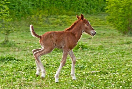 Newborn foal by Konstantinos Arvanitopoulos