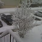 Virginia and the Great Blizzard of '09 by Ethar Hamid