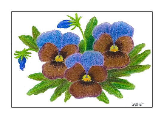 VIOLET SPECIAL - PASTEL PENCIL by RainbowArt