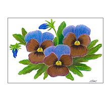 VIOLET SPECIAL - PASTEL PENCIL Photographic Print