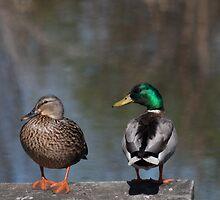Ducks on a Dock by Renee Blake