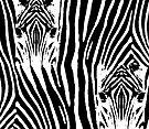 Zebra Stripes by CarolM