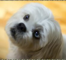♥♥My Eyes Adore You U Know I luv U Right ♥♥ (Puggsy)♥♥♥ by ╰⊰✿ℒᵒᶹᵉ Bonita✿⊱╮ Lalonde✿⊱╮