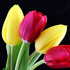 Red & Yellow Tulip Bunch by Isabel J Coote Photography
