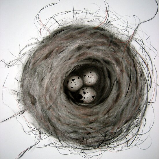 nest by Sally McColl