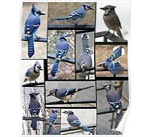 Jazzy Blue Jays 3 Poster