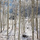 Winter Aspens (Aspen, Colorado) by Brendon Perkins