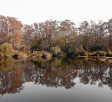 Everglades by Carlos Melillo