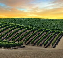 Golden Skies over Napa Valley by Brendon Perkins